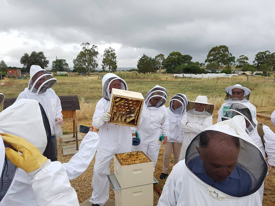 Andrew opening a Warre Hive