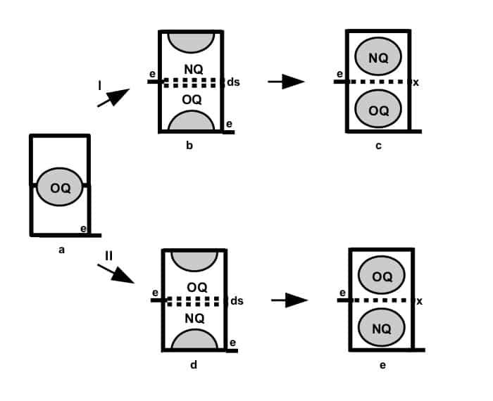 Hogg 2Q Method 1
