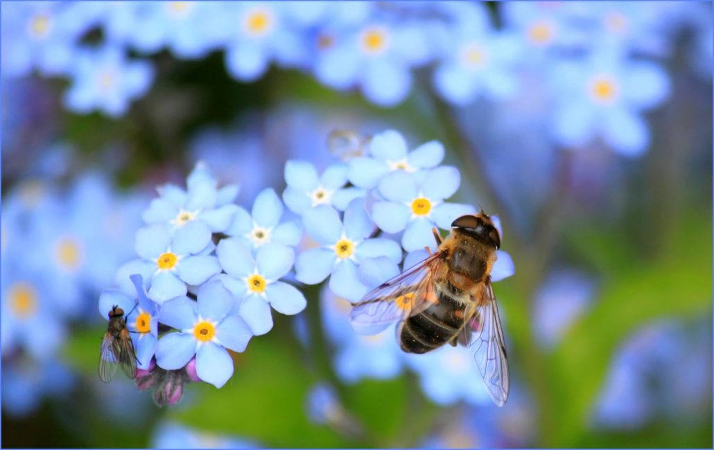 bee-bloom-blossom-60579