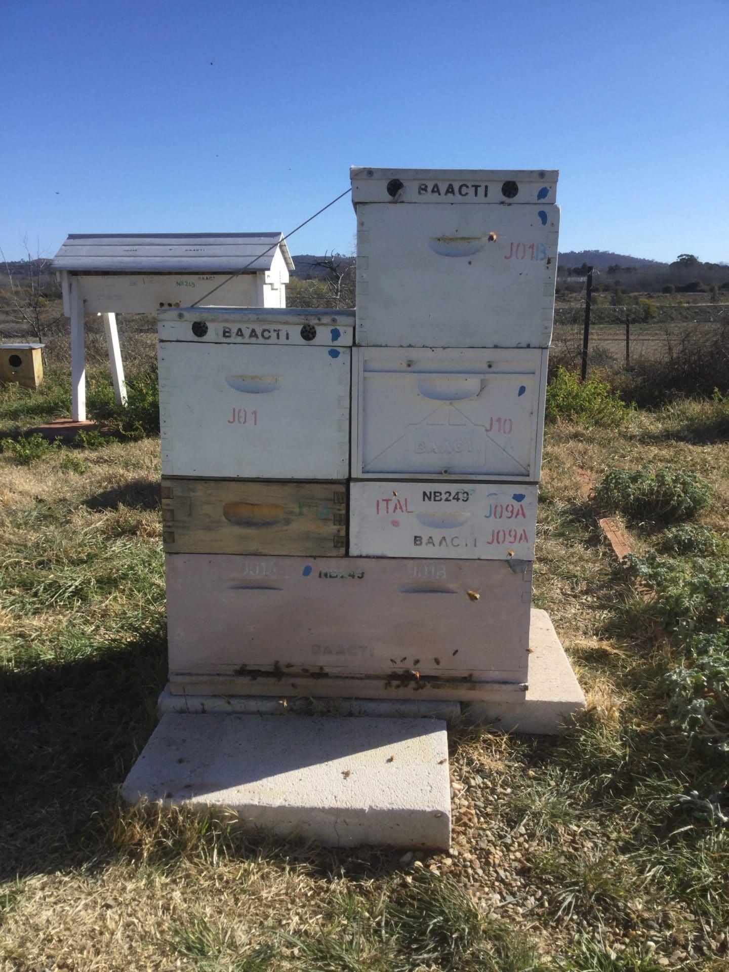 16F-hive