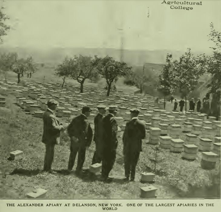 Alexanders apiary 1921