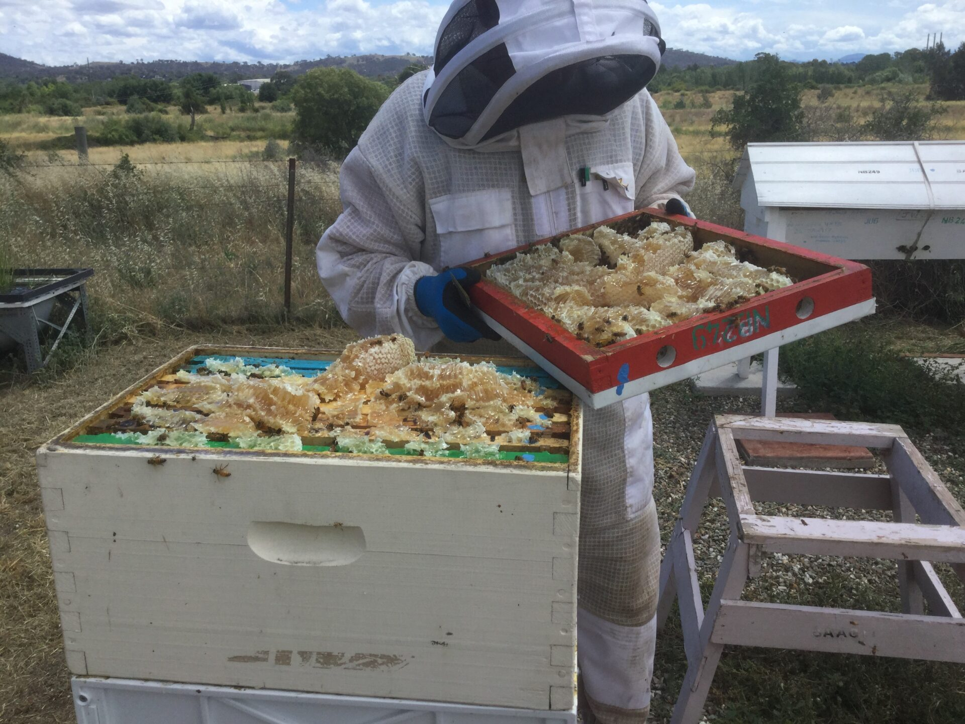 JWA Honey in lid 09012019