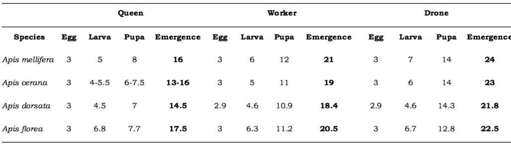Table-1-Brood-development-of-honey-bee-species