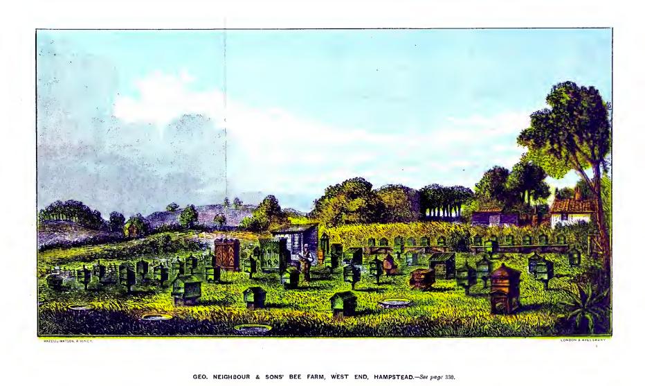 Neighbours-bee-yard-1866